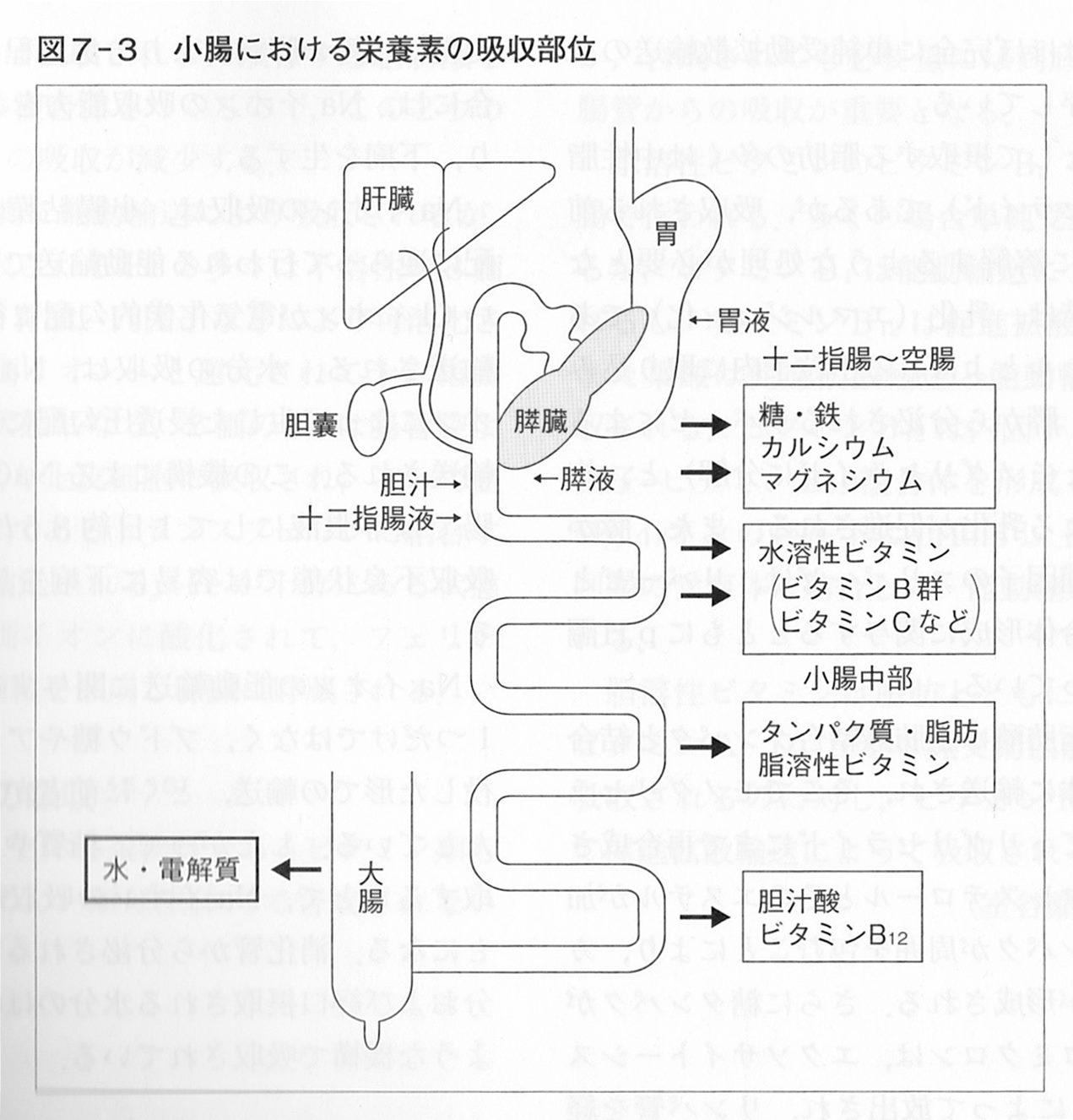 腸 リハビリ 小腸の栄養吸収
