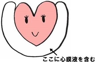 心臓 位置 図 構造 働き 場所