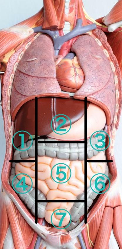 腸の痛み原因 右腹部、左腹部、中央