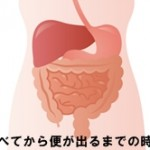消化管の構造と食べてから便が出るまでの時間