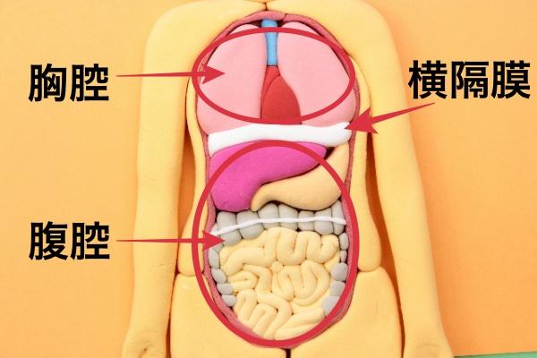 腹水がたまる病気 症状