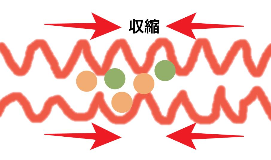 腸の運動 振子運動 縦走筋