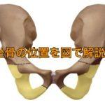 坐骨の位置を図で解説!構造や働きをお伝えします!