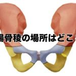 腸骨稜の位置を図で解説!体表からも形がわかる