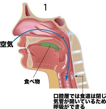食道 気管 位置 図