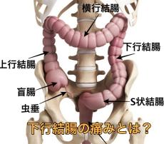 下行結腸の位置 図