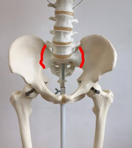 仙腸関節 位置 図