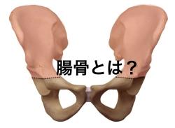 腸骨の位置 図