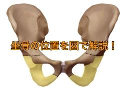 坐骨位置図 座骨