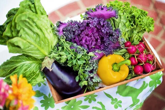 庭 野菜 無農薬 便秘