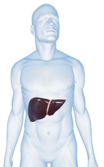 肝臓の痛み 原因 解消法
